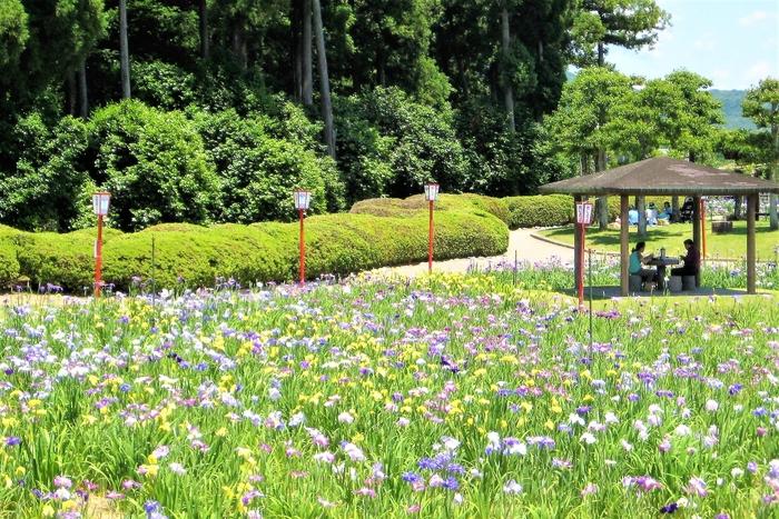 豊橋市の観光スポット・賀茂しょうぶ園