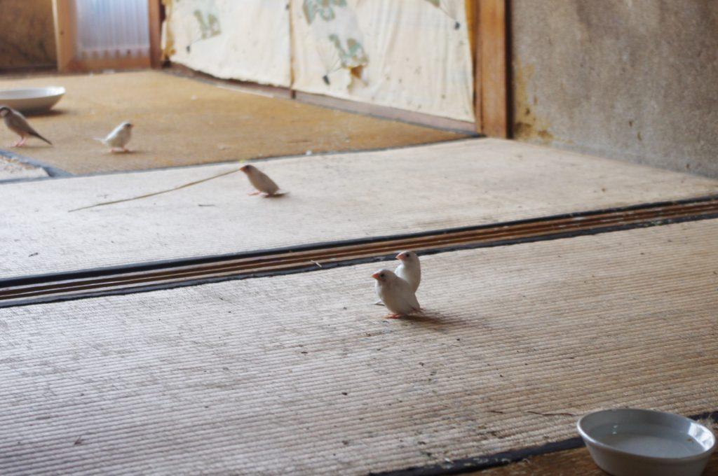 あいちトリエンナーレ豊橋地区水上ビル会場ラウラ・リマの作品の小鳥