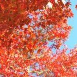岩屋緑地(岩屋観音)の紅葉が見頃だと思う、たぶん