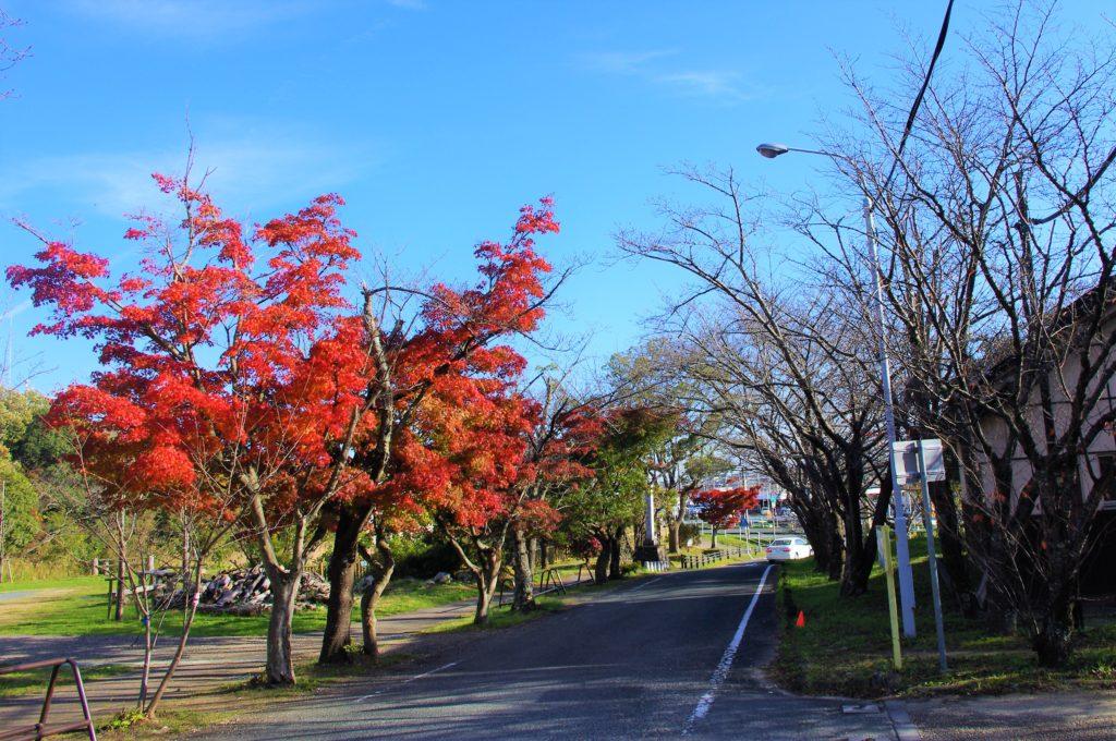 岩屋緑地入口の紅葉