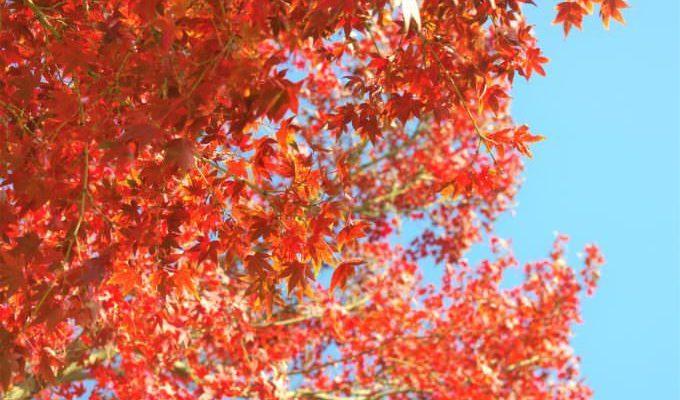 岩屋緑地の紅葉