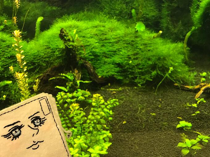 のんほいパークの植物園